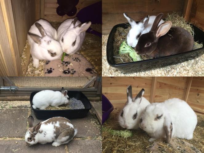 Bunnies combine_images
